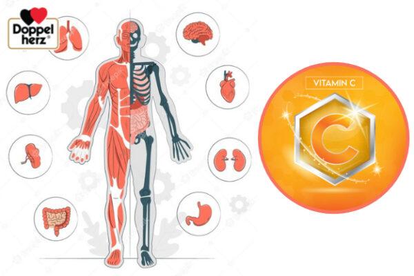 Cơ thể người không có khả năng tự tổng hợp vitamin C nên cần bổ sung từ bên ngoài qua thực phẩm hây sản phẩm chứa vitamin C tăng cường miẽn dịch